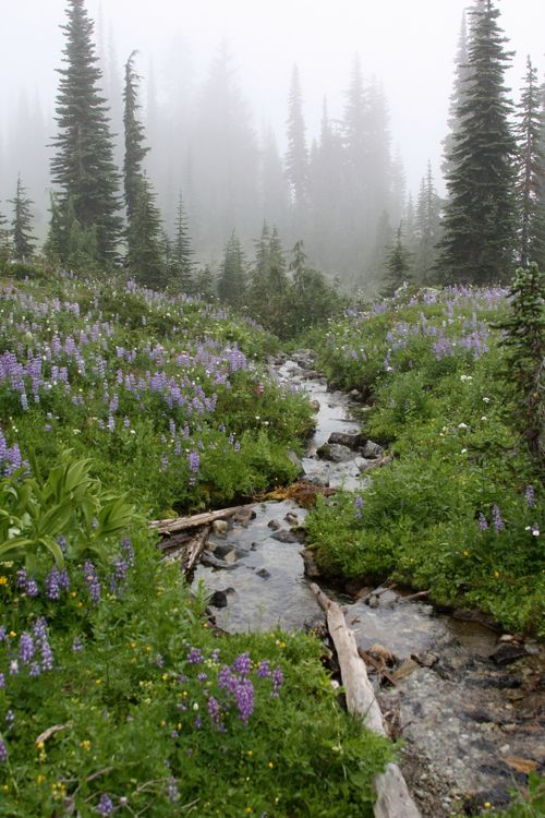 Unnamed creek, William O. Douglas Wilderness