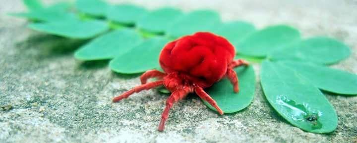 Mrutyunjay (Papuna)