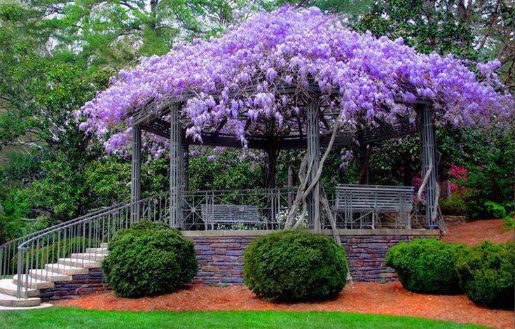 great shade ground cover plantings and a wisteria trellis - Google Search