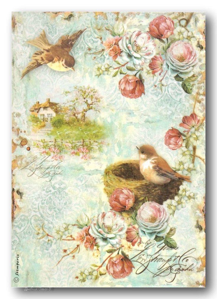 Открытки днем, фон для открытки птицы
