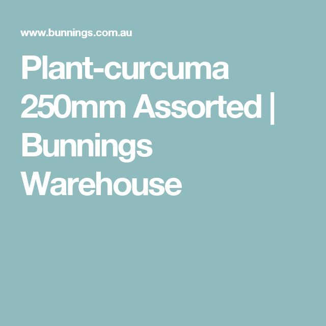 Plant-curcuma 250mm Assorted | Bunnings Warehouse