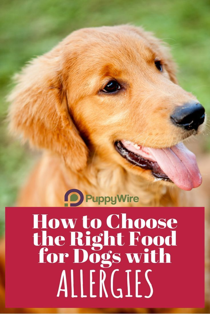 We cover some of the most common questions we receive about dog food for allergies. Not only do we cover grain free dog food for skin allergies, but we also give you our top 5 best hypoallergenic dog foods.
