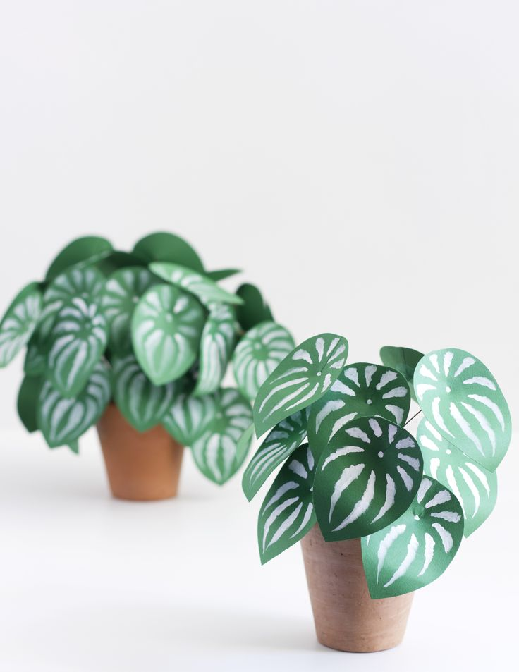 The watermelon peperomia, an all time favorite of mine, is such a beauty!  Just look at those watermelon stripes!I put together a tutorial to make  her out of paper! You can find the how-to over on The House That Lars Built !