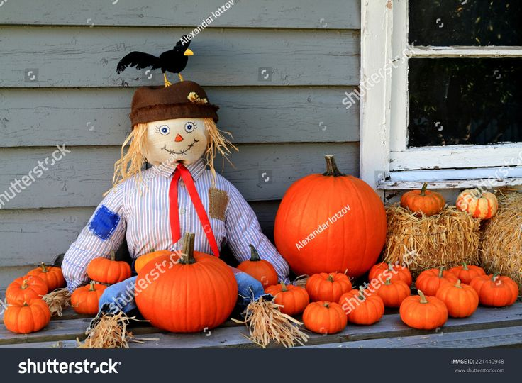 Scarecrow seating on porch of old country house and guarding orange pumpkins from birds, typical traditional Thanksgiving symbols used in decoration.