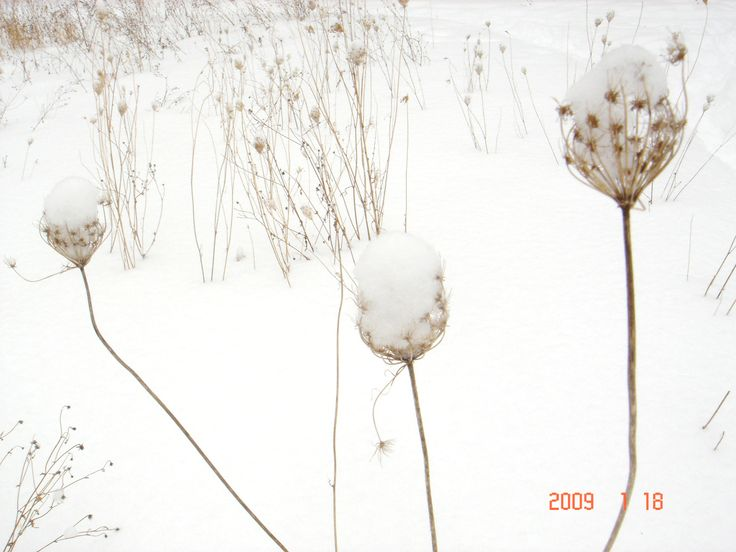 Snow caps, photo by Svetlana