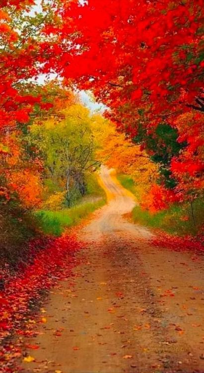 Autumn Road, Michigan  photo via jen