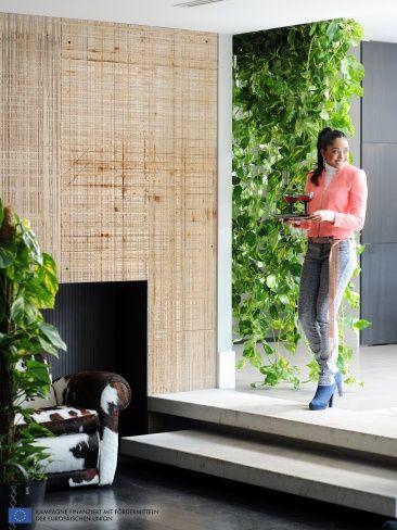 Die Efeutute als pfiffige Lufterfrischung im Raum  #efeutute #zimmerpflanzen #pflanzen #indoor #Epipremnum #pflanzenfreude