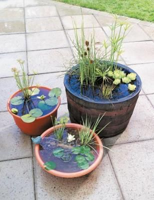 How to Make an Outdoor Water Garden  Use easy-care water plants to make miniature fountains for small outdoor areas. (I love water gardens, but standing water = mosquitoes, so I'm conflicted. Maybe if there were frogs or fish. But I have cats. And children. So I'm conflicted.)