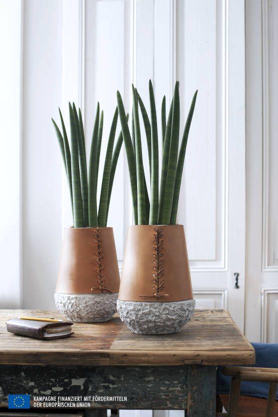 Dekorative Pflanzen Furs Wohnzimmer ? Bigschool.info Moderne Wohnzimmer Pflanzen