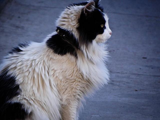 #cat #Chile #Valparaiso #animal #bw #animals #colors