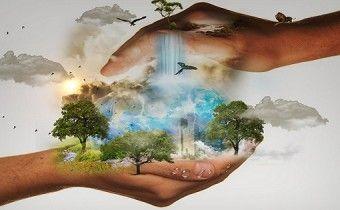 Angol nyelvű cikk: A Fák napja és a Föld napja