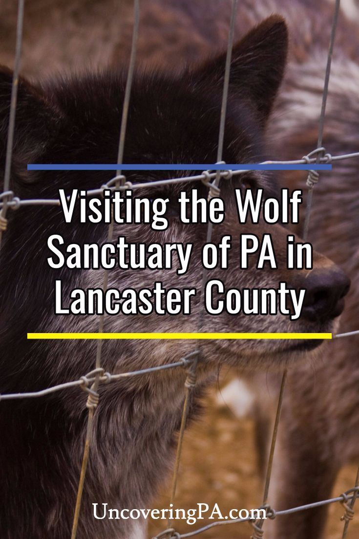 Grand Canyon Pa Directions%0A Howling with Wolves at the Wolf Sanctuary of PA
