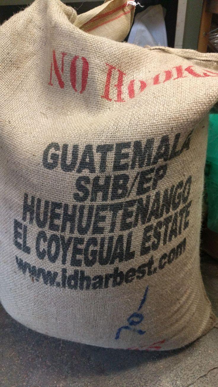 guatemala SHB/EP huehuetenango el coyegual estate