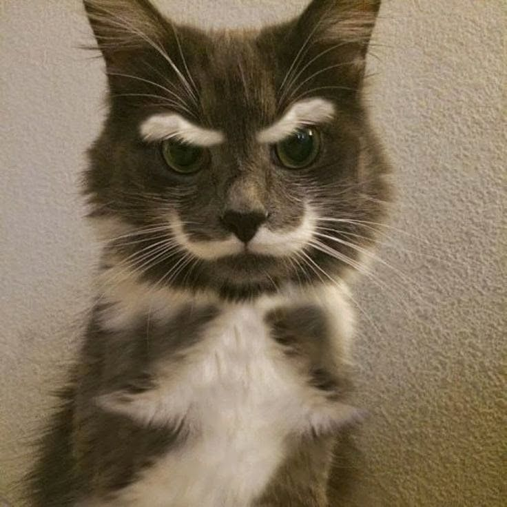 5 Pets With Extremely Strange Markings. I think God does have a sense of humor and every now and again, one of His jokes comes along to keep us all amused.