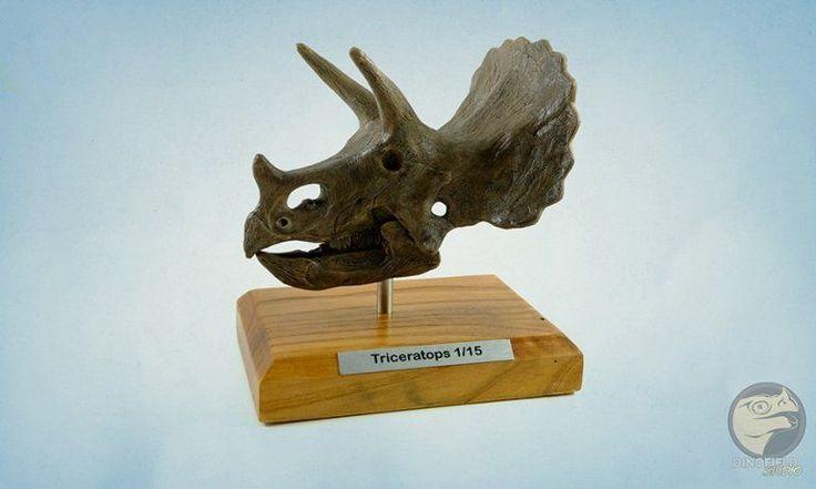 Triceratops Kafatası Modeli 1/15