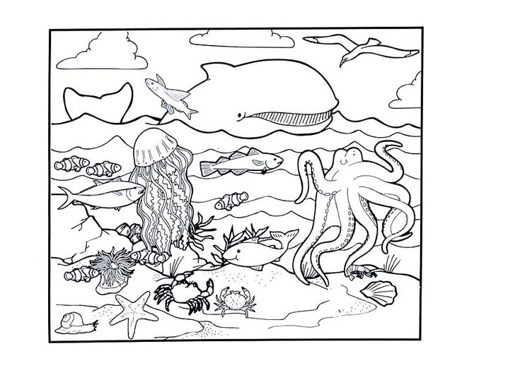ocean animals plants coloring pages - photo#33
