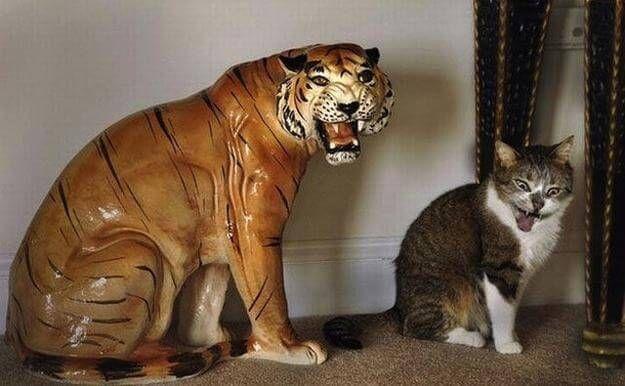 モノマネする猫