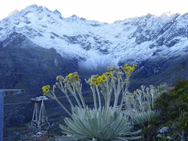 Pico Bolívar, Sierra Nevada National Park, Mérida State, Venezuela - With the World's highest and longest cable-car, and a Frailejón flower