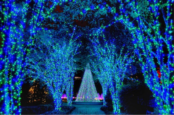 Beautiful Blue Lights At The Atlanta Botanical Gardens