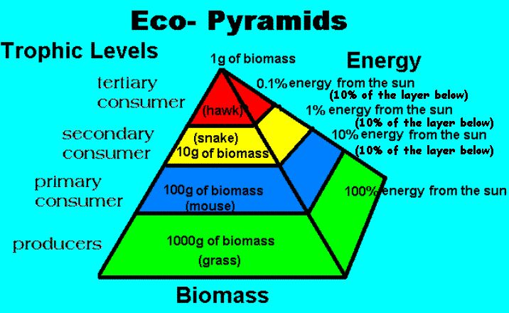 Energy Pyramid Percentages 14 best 7th Grade Life...