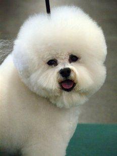 Los 10 perros más pequeños del mundo | Cuidar de tu mascota es facilisimo.com