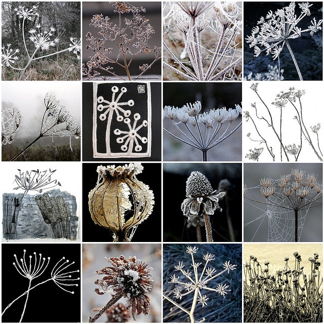 For Mosaic Monday  Frost, Snow, Ice, Seeds, Seed, Heads, Pods, Mosaic    Love Stitching Red
