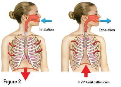 Breathing and Back Pain - Erik Dalton Blog