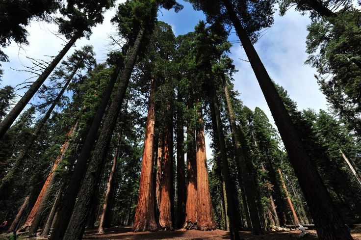 Where the Smog Ends Up: The Giant Sequoia Forest