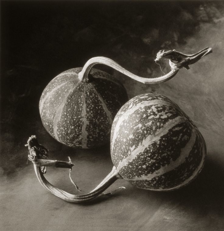 Squash ©Cy DeCosse Fine Art Photography. The Beauty of Food Collection. Limited edition platinum-palladium print. CyDeCosse.com #photography #art #food