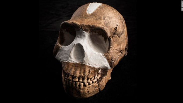 JoanMira - 1 - World : Imagens - Animais incriveis - 'Homo naledi'