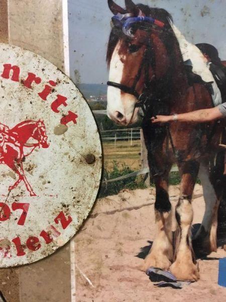 Shire Horse 14 Jahre Shire-Liebhaber aufgepasst, hier kommt George! Ein super lieber, umgänglicher und gelehrige sanfter Riese auf dessen Rücken man sich fühlt als könne man die ganze Welt umarmen...
