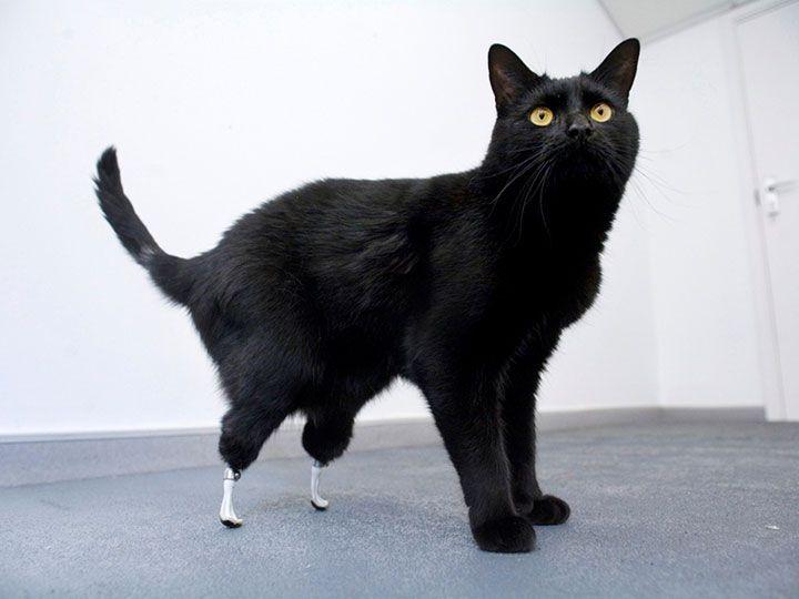 20 animaux handicapés retrouvent leur joie de vivre grâce à des prothèses conçues sur mesure