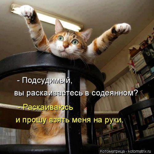 Новая котоматрица для всех! (34 фото)
