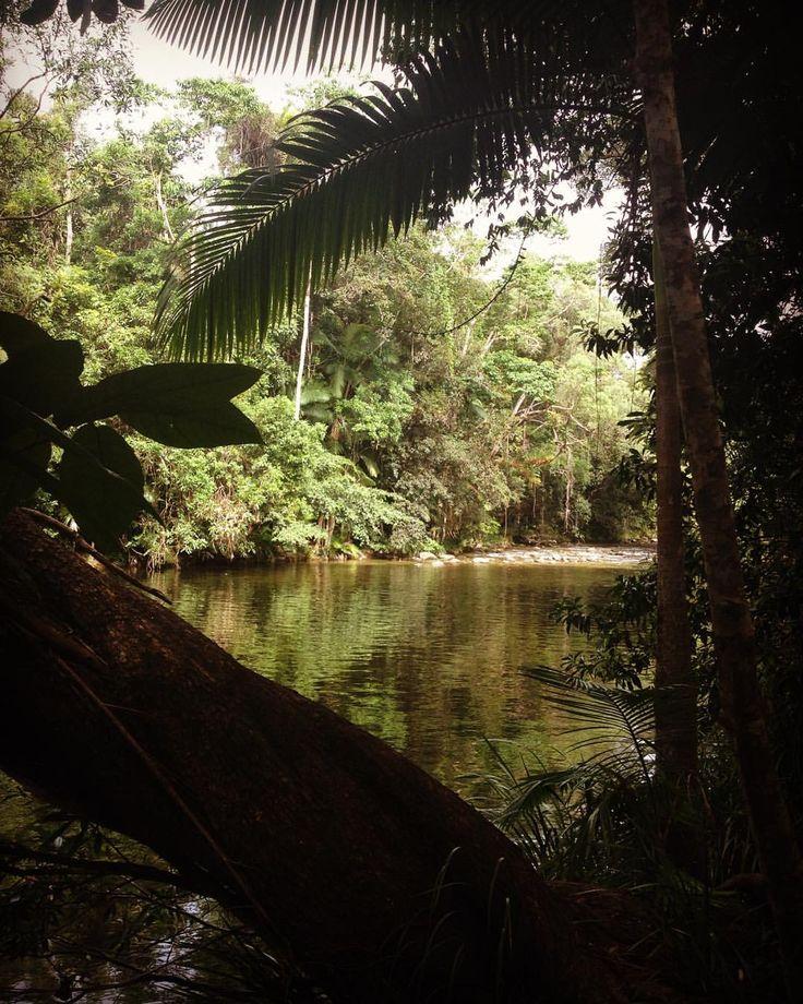 "58 Likes, 5 Comments - 🌴blog & accommodation🌴 (@awayinportdouglas) on Instagram: ""Mossman Gorge #mossmangorge #portdouglas #australia #river #peace #stillness #nature #beauty…"""