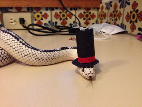 Someone put a hat on a snake...