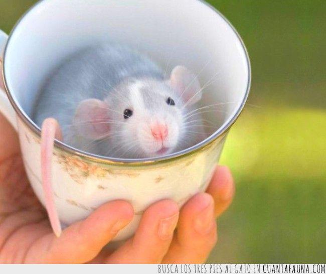 22078 - Las 19 tazas de desayuno más cuquis que podrás encontrar