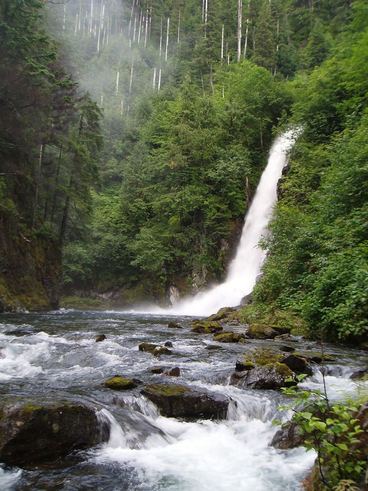 tongass national forest | Steel