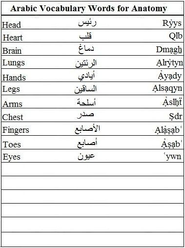 Arabic Vocabulary Words for Anatomy - Learn Arabic