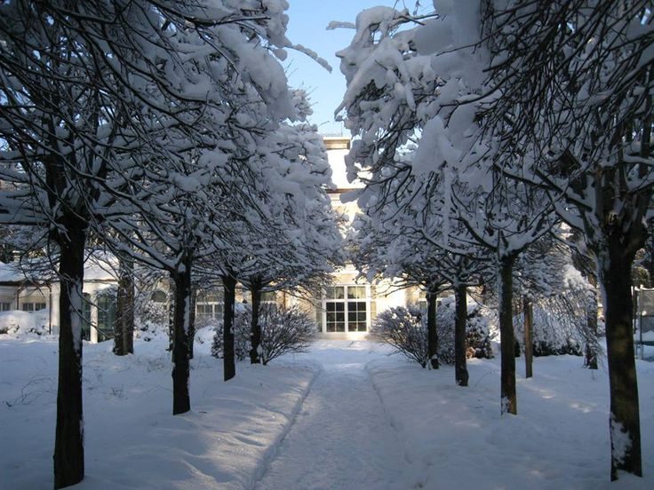 Structured garden in winter time - main path