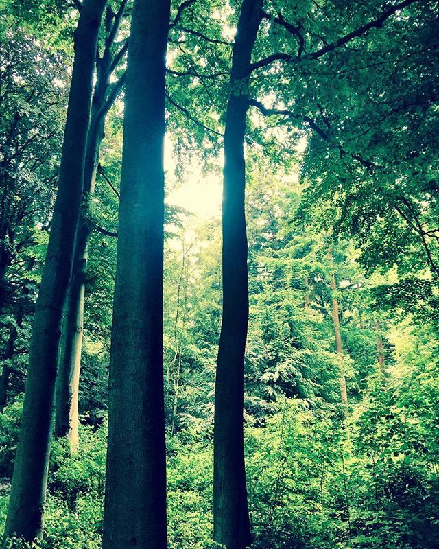 Photography by Frank Brandwijk I '50 Shades of Green' Greens' 'Forrest' 'Green Day with Trees' 'Lumber Jack'
