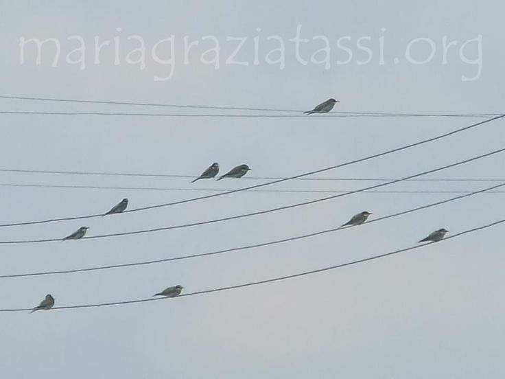 Birds, Bee eaters, Italy, Tuscany, Maremma Toscana.