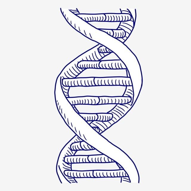 Technology Cartoon Hand Drawn Dna Cartoon Dna Hand Drawn Dna Dna Genetic Material Genetic Technology Png Transparent Clipart Image And Psd File For Free Down How To Draw Hands Graphic Design