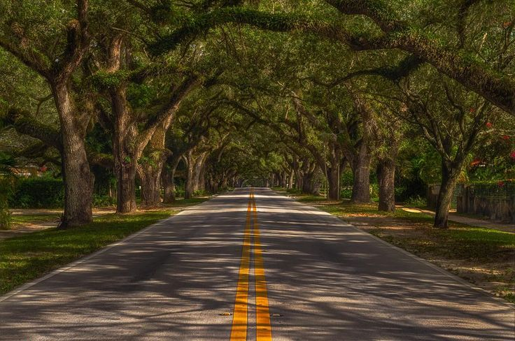 CORAL WAY Large moss-covered Oak and Mahogany trees have created an amazing canopy over this East-West running road just South of the Miami International Airport.  We were lucky enough to stumble across this location after picking up our rental car while heading down for a week of diving in the Florida Keys.  With a little planning and some dodging of oncoming traffic I was able to capture this amazing scene on our way back from the Keys before spending a few days on South Beach.  Miami FL…