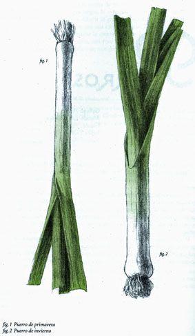 Las verduras de muchas maneras   Karin Leiz   Ilustraciones:  Juliet Pomés Leiz   Barcelona, 2011         Dedicatoria   …   Otra de las ...