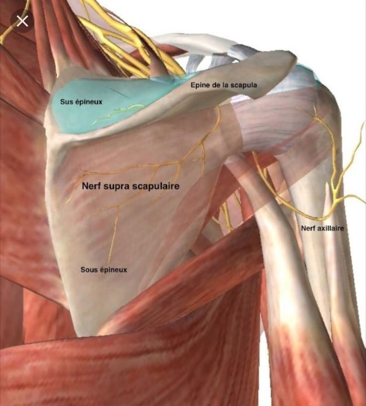 Pin by Patricia Khoury on Anatomy Massage therapy