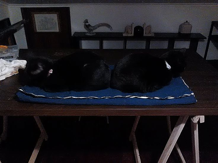 BACK-TO-BACK  At first, you see just a picture showing 2 black cats sitting back-to-back.  However, if you check the pic background,(pic 2/zoom detail) you will notice that the cats are in fact 'mimicking' the stone figures, placed back-to-back on a shelf, in the background.