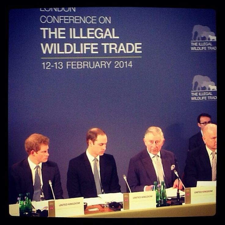 London Conference on illegal wildlife trade | Royal Fascination ...