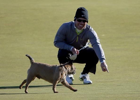 Il cane ruba la pallina da golf e l'atleta ride (Gallery)