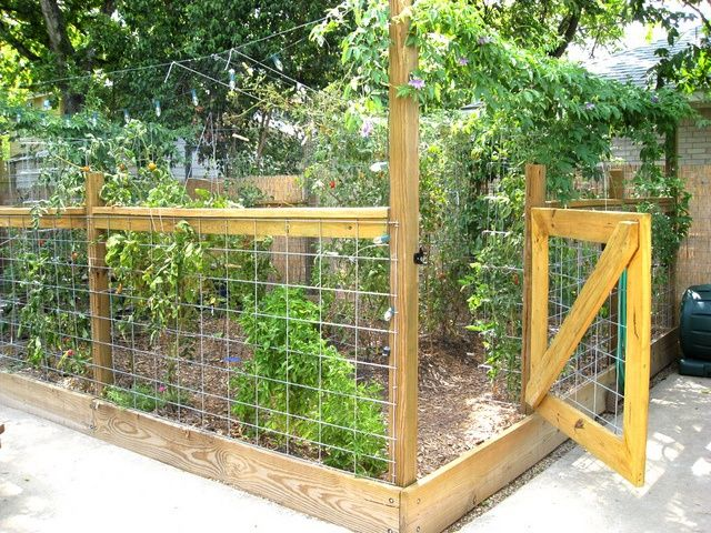 Great fenced garden, but you'd have to use chicken wire to keep the squirrels out. And I love the lights strung above the garden!