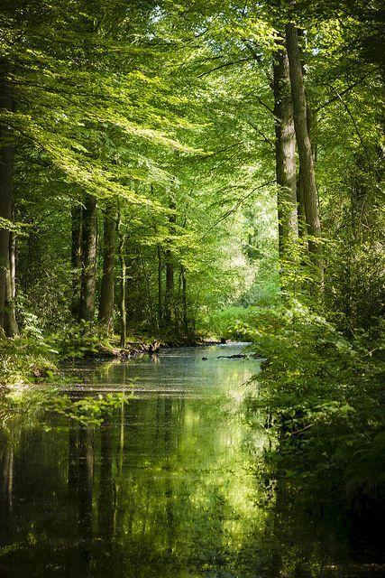 Letitbelikeit. – #Letitbelikeit #woodland